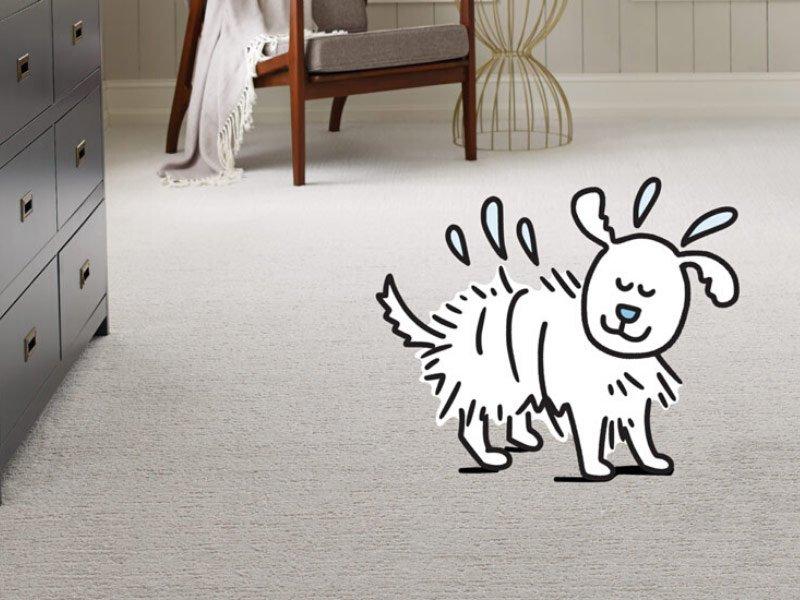 Care & Maintenance of Carpet